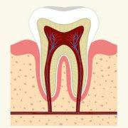 經常按摩牙齦有什麼好處?